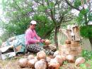 Brady peeling coco nuts